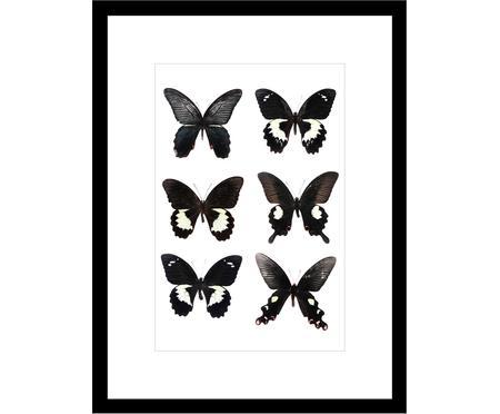 Impression numérique encadrée Butterflies Dark